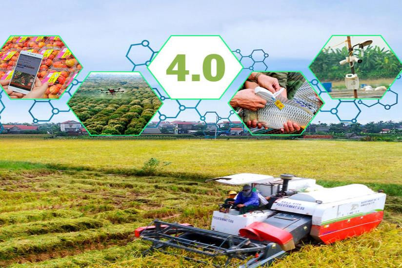 Hải Dương chuyển đổi số trong nông nghiệp: Vượt thách thức - Tăng tốc vươn xa